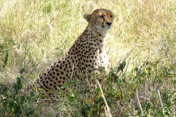 animals in serengeti