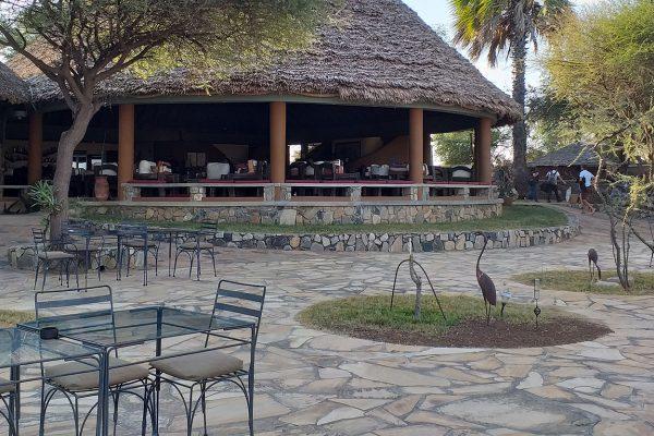 safari in tanzania. game drive