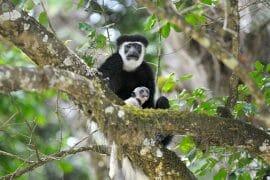 Visit tanzania, Tour Tanzania