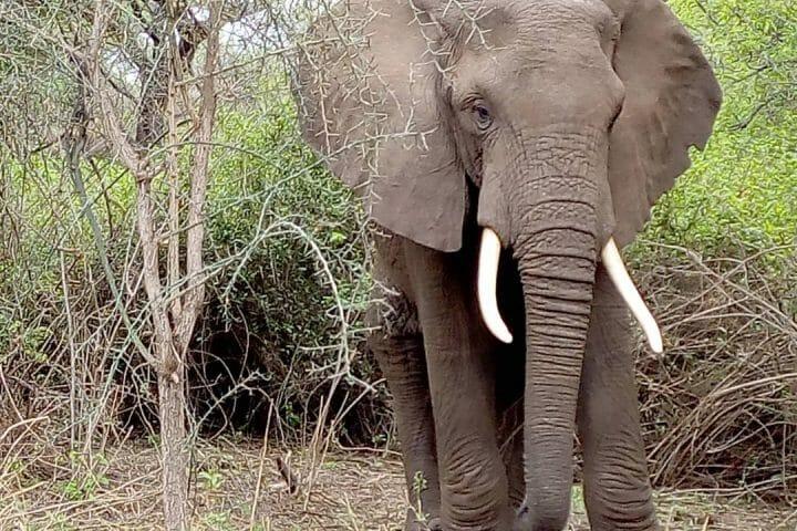 safaris in arusha