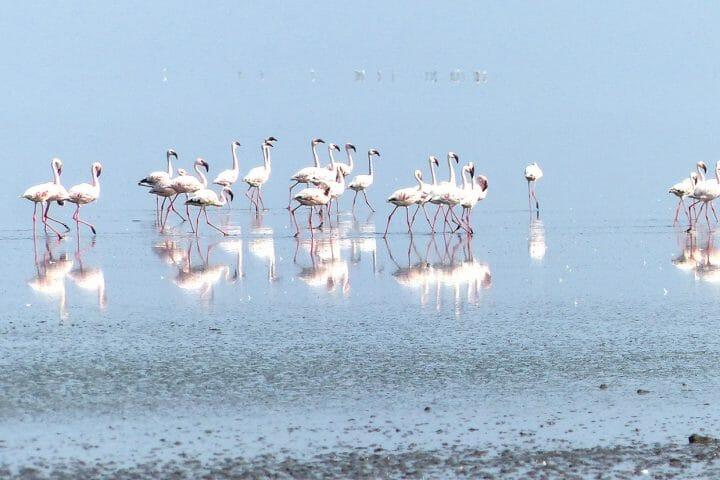 tour tanzania attraction on natural lakes