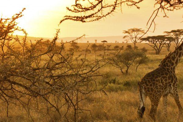 serengeti national park aninals