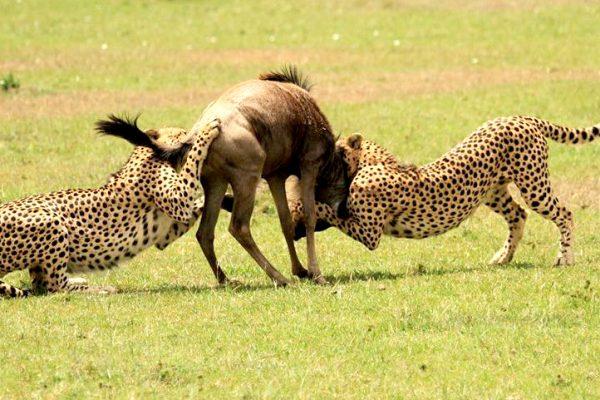 serengeti plain in Tanzania